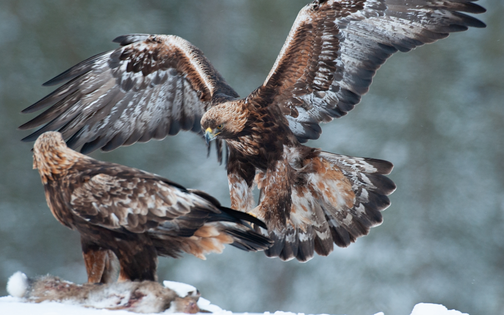 Wildlife Photography Trips: Eagles